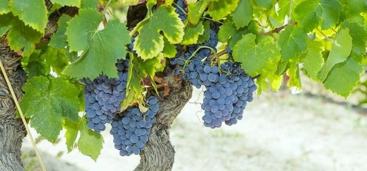 de-vigne-aux-vins
