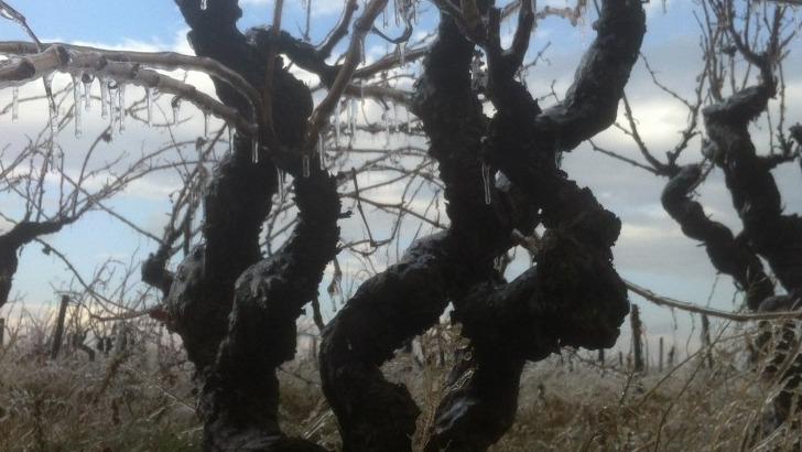 clos-des-serenes-de-vieilles-vignes-composent-egalement-vignoble