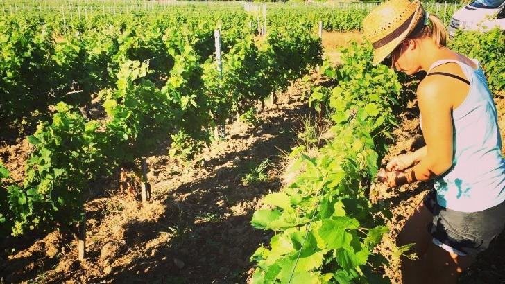 domaine-du-chateau-de-bellevue-a-morgon-situe-au-coeur-du-beaujolais-viticole