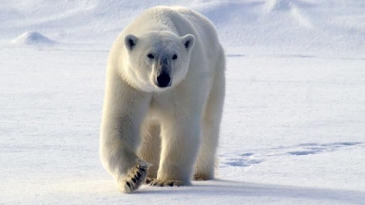 amarok-esprit-nature-a-saint-pierre-de-cherennes-destination-spitzberg-norvege-pour-une-immersion-dans-un-univers-polaire