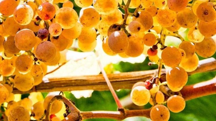 des-vignes-plantees-coteaux