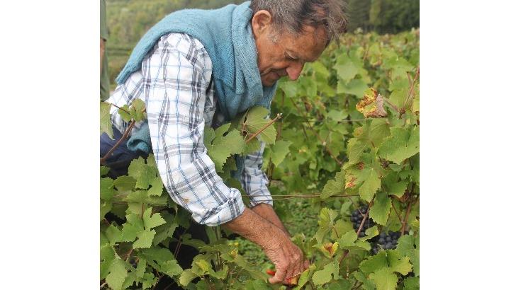 champagne-vincent-bliard-un-vignoble-soigne-selon-respect-de-nature-et-de-environnement