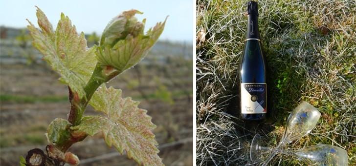 vignes-travaillees-politique-d-agriculture-saine