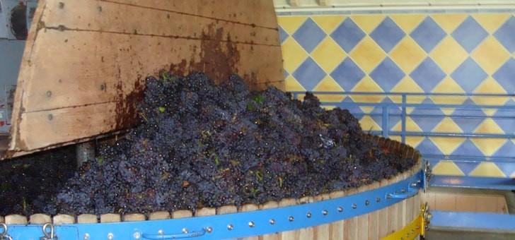 raisins-prets-pour-pressurage