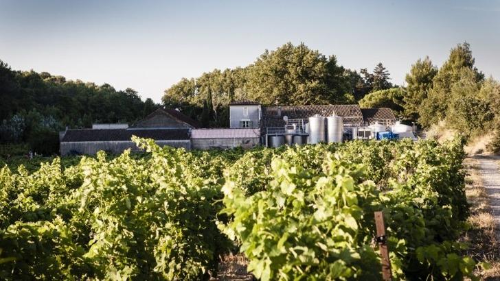 domaine-de-brunely-des-vins-incarnent-terroir-exaltant-richesse-due-a-un-ensoleillement-optimal