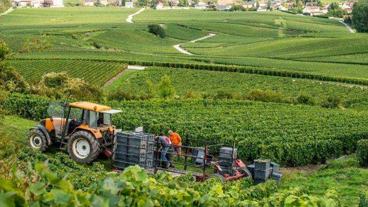 champagne-forest-marie-a-trigny-travail-de-vigne
