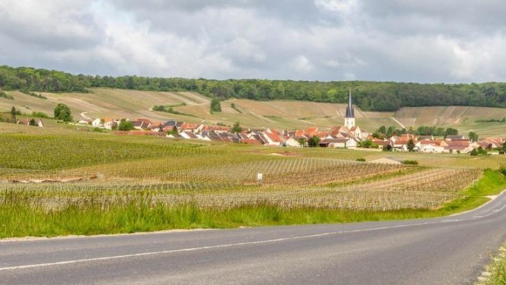 champagne-jullion-rigaut-est-niche-au-coeur-de-montagne-de-reims-connu-pour-des-vins-de-caractere-et-style