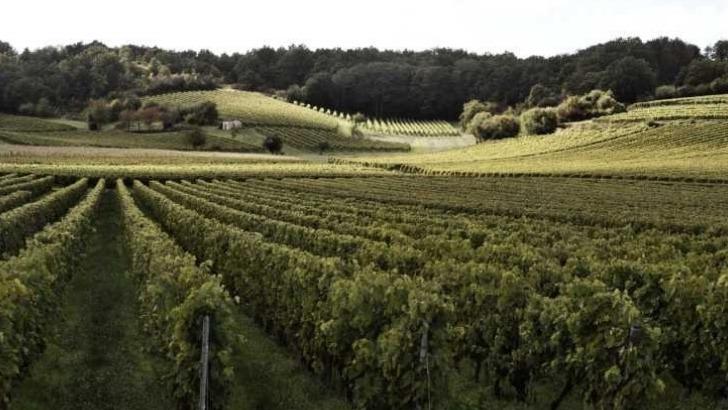 maison-boinaud-420-ha-de-vignes-implantees-cru-grande-champagne