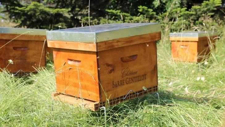 chateau-barre-gentillot-10-ruches-ont-ete-installees-sur-domaine-pour-favoriser-biodiversite
