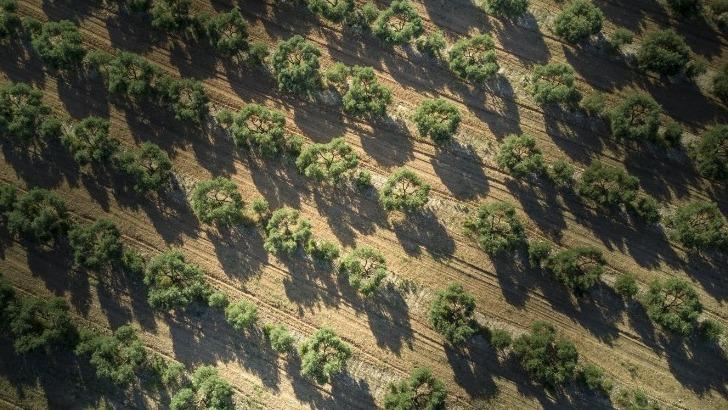 vins-alcools-domaine-chateau-calissanne-a-lancon-provence