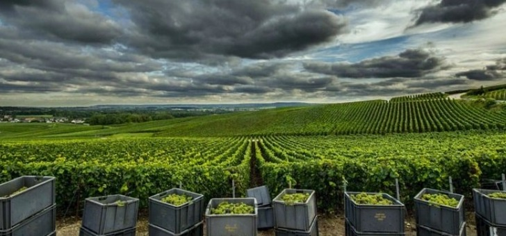 vendanges-realisees-dans-regles-de-art