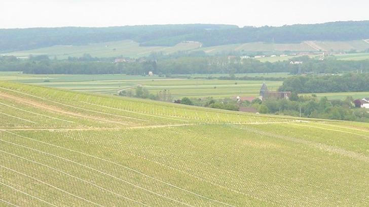 champagne-moyat-jaury-guilbaud-travaille-majoritairement-pinot-noir-puis-chardonnay-et-un-vieux-cepage-champennois-pinot-blanc