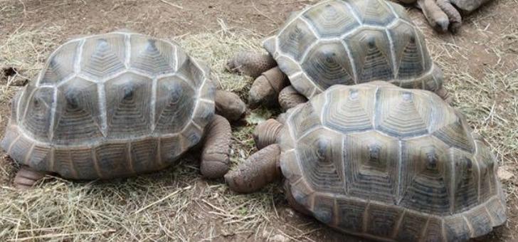 sejours-loisirs-village-des-tortues-a-gonfaron