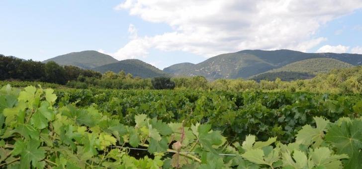 es-wine-tourisme-oenologique-languedoc-roussillon
