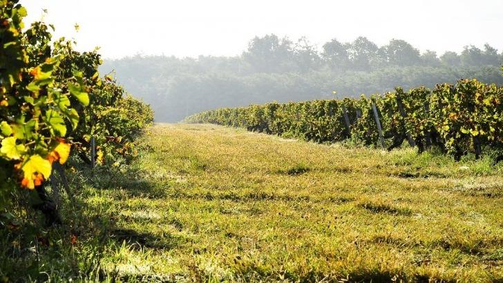 chateau-bastor-lamontagne-a-preignac-un-vignoble-certifie-agriculture-biologique