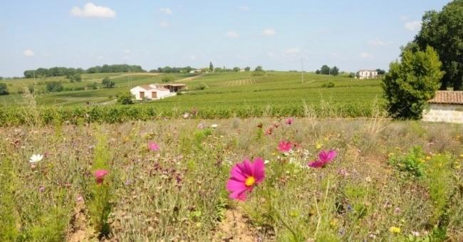 vignobles-massarin-a-castillon-bataille