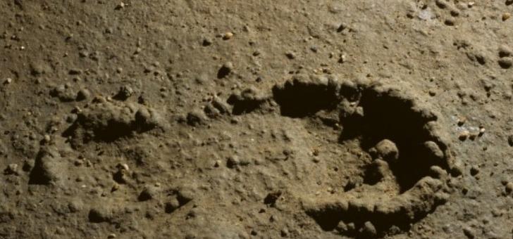 empreintes-de-pas-prehistoriques-datant-d-au-moins-12-000-ans