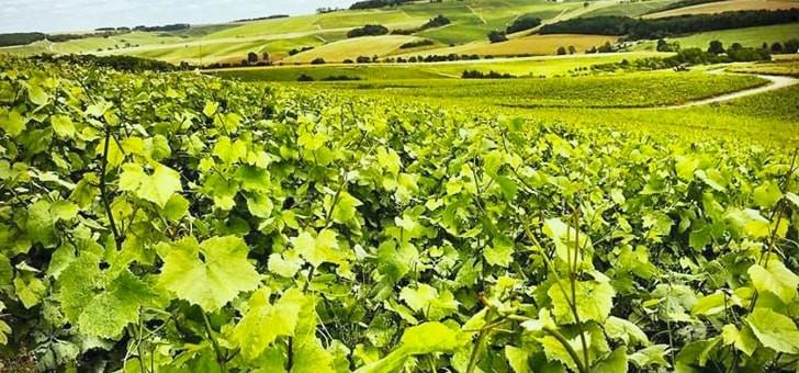 vignoble-de-treize-hectares