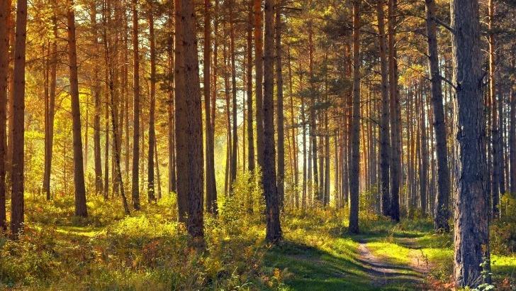 ecotree-pratique-futaie-irreguliere-pour-favoriser-regeneration-naturelle-des-arbres