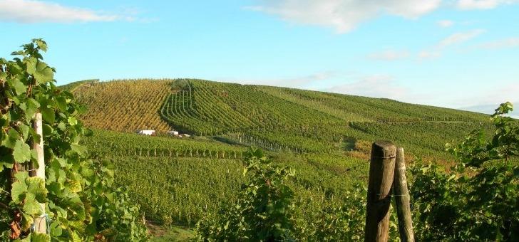 a-dambach-sols-sont-granitiques-avec-un-granit-rose-a-deux-micas-cette-particularite-geologique-donne-des-vins-tres-expressifs-et-tres-mineraux