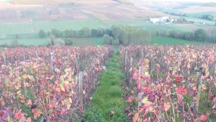 champagnes-yoan-tapprest-domaine-aux-couleurs-de-automne