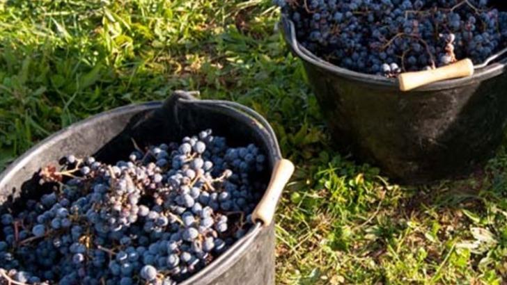 domaine-belmont-des-vendanges-manuelles-et-une-maturation-tardive-apportent-une-concentration-remarquable-aux-vins-du-domaine