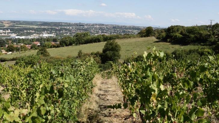 bouc-et-treille-confectionne-des-vins-bio-aoc-coteaux-du-lyonnais