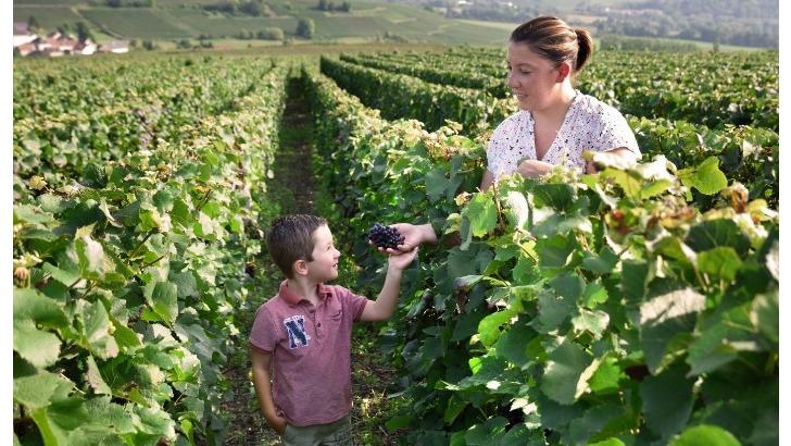 champagne-loriot-xavier-a-binson-et-orquigny-promenade-au-coeur-des-vignobles