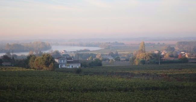 vins-alcools-domaine-scea-vignobles-famille-curl-a-fronsac
