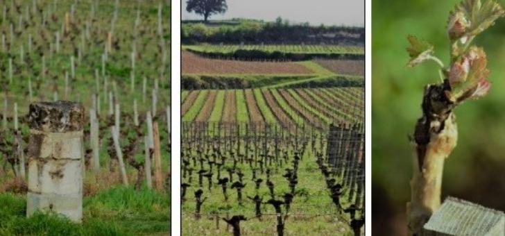 wine-tour-booking-oenotourisme-sur-mesure-et-visite-viticole