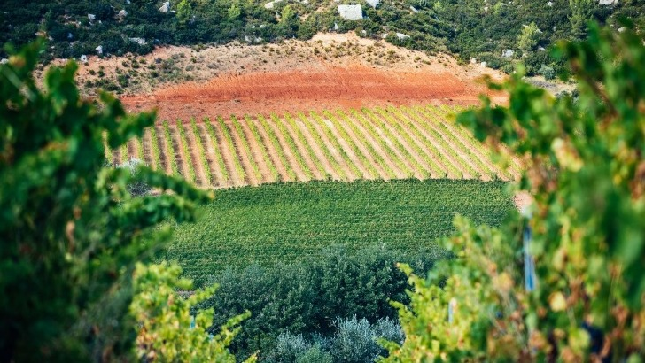 commune-chateauneuf-rouge-tient-son-nom-a-un-sol-argilo-sableux-compose-de-bauxite-donne-sa-couleur-rouge