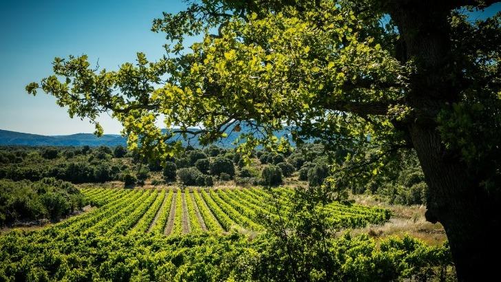 domaine-de-brunet-des-vins-de-caractere-ne-laissent-pas-indifferent