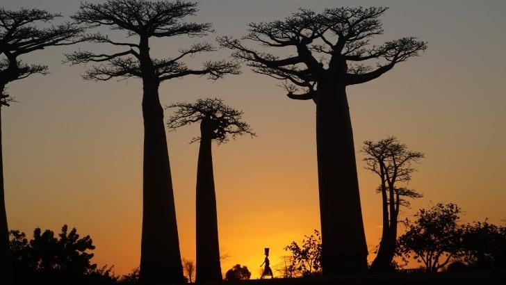 mahayexpedition-a-antananarivo-madagascar-une-biodiversite-luxuriante