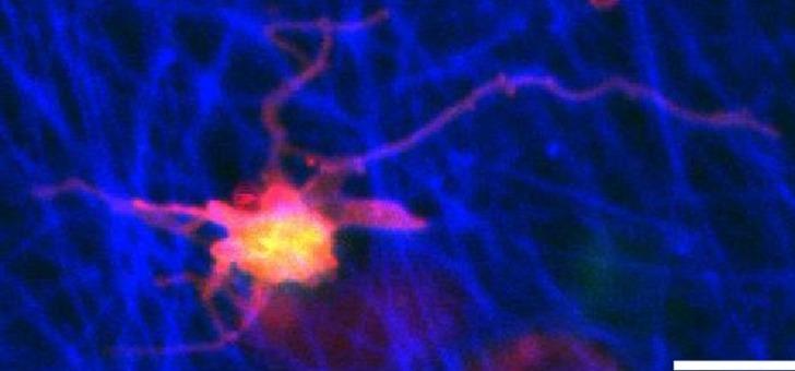 celtisphybio-recherches-biologie-cellulaire