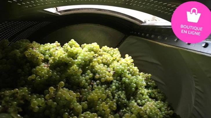 champagne-goulin-roualet-des-cuvees-riches-saveurs-grace-a-diversification-des-cepages