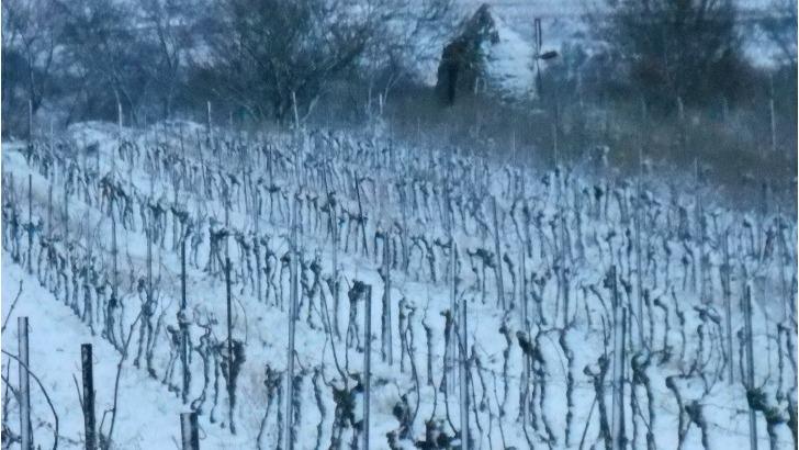 domaine-maillols-vignoble-par-temps-d-hiver
