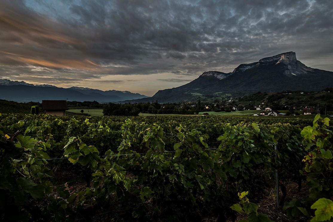domaine-perceval-ambassadeur-des-grands-vins-de-savoie