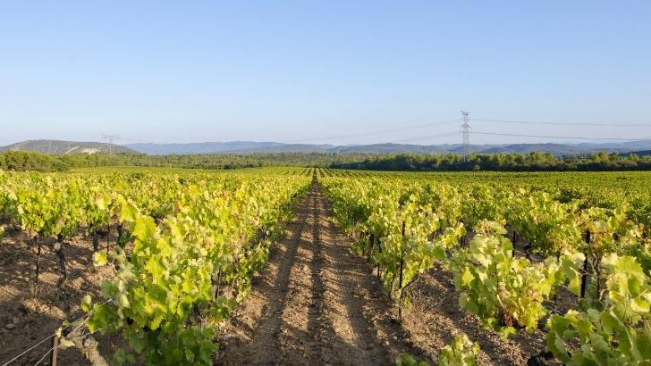 vignes-vieilles-quarante-cinquante-ans