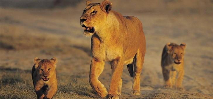 agence-receptive-tanganyika-expeditions-a-dar-es-salaam-safaris-tanzanie