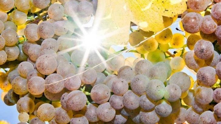 un-vignoble-mene-viticulture-raisonnee