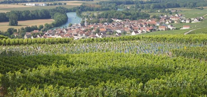 une-vue-panoramique-sur-vignes