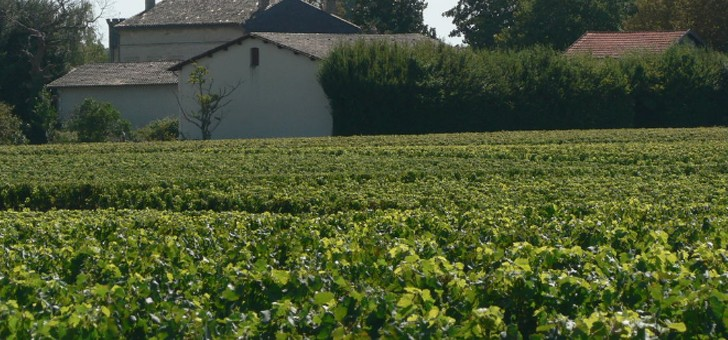 13-ha-de-vignes-sur-appellation-saint-emilion