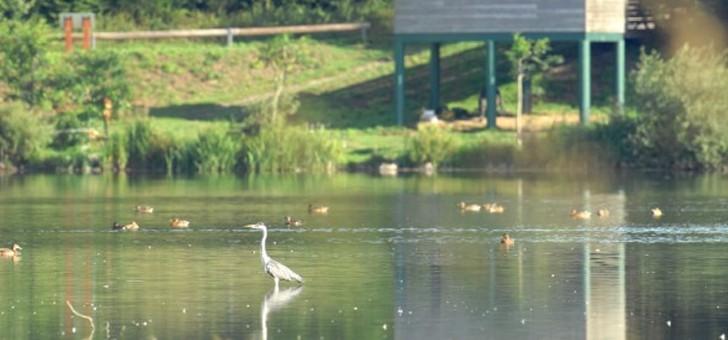 avesnois-est-une-des-zones-plus-riches-de-region-hauts-de-france-matiere-de-biodiversite