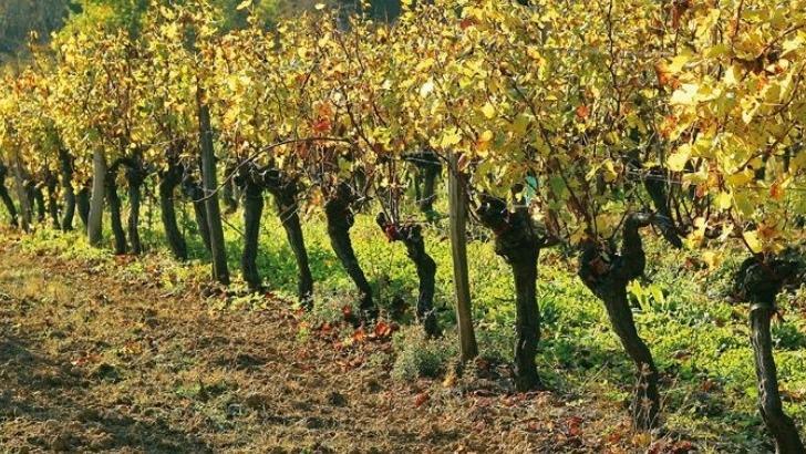 un-domaine-viticole-attentif-a-environnement