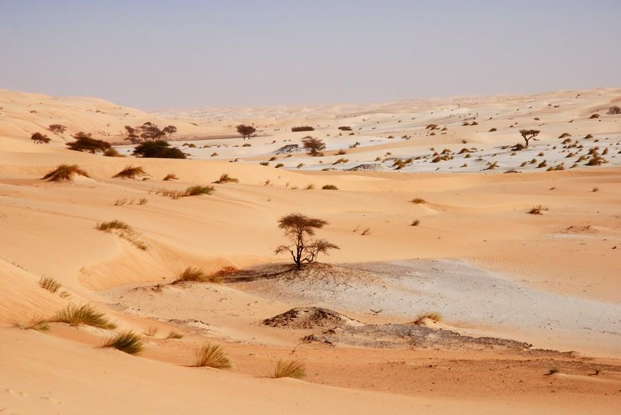 detours-mauritanie-warane