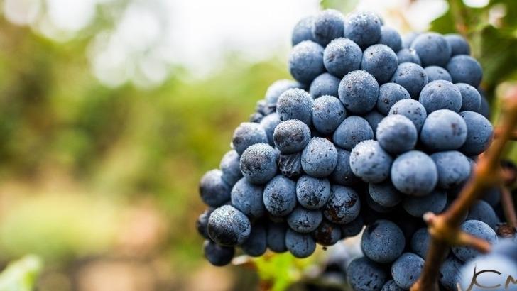 domaine-saint-thomas-marselan-sur-ses-terres-de-predilection-donne-des-vins-bien-concentres-aux-aromes-epices-et-fruites