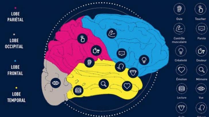 Fonctionnement du cerveau, ICM à Paris