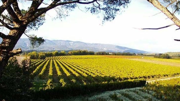 vignoble-du-chateau-turcan-etend-sur-une-surface-de-15-ha