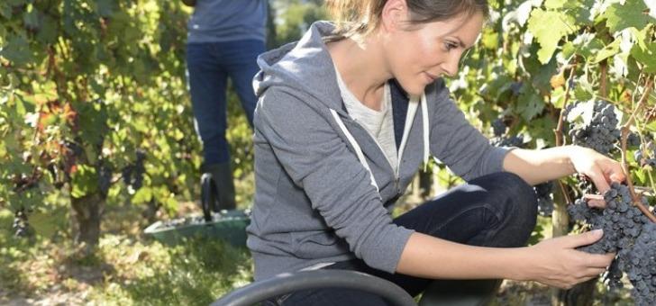 chateau-bourdieu-fonbille-a-monprimblanc-un-sol-diversifie-offre-une-gamme-de-vins-expressifs-et-riches-aromes