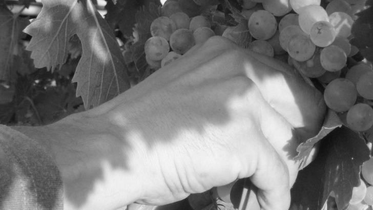 domaine-de-fontavin-a-courthezon-mise-sur-vendanges-manuelles